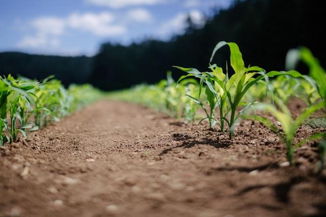 Zakup produktów do ochrony roślin