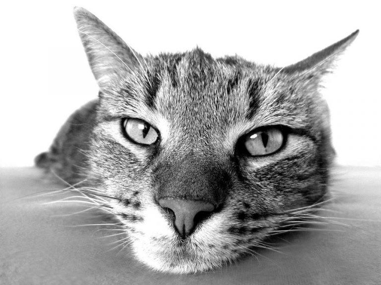 Jak skutecznie ochronić kota przed wypadnięciem z balkonu?