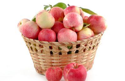Jak przechowywać owoce pigwy, żeby się nie zepsuły?