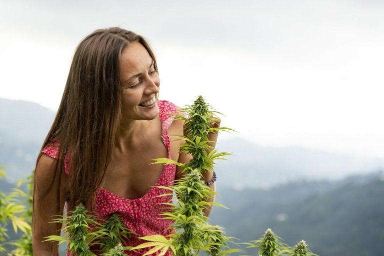 Sklep dla sympatyków marihuany