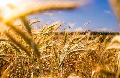 Jak skutecznie pozbyć się chwastów z naszych upraw?